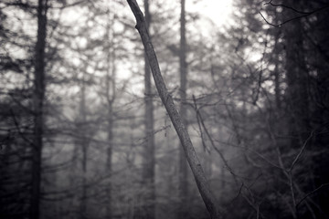 Tilted To The Left, Dark Foggy Mystical Forest In Infrared Photography