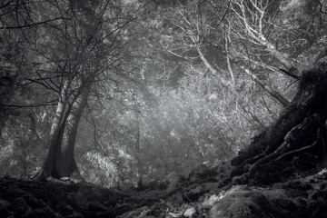 On The Edge, Dark Mystical Forest High Contrat Infrared Photography