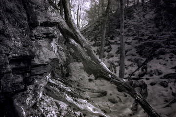 The Cut, Dark Autumn Forest, High Contrast Infrared, Full Spectrum Wide Band Photography