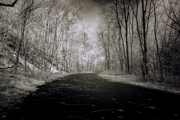 Dark Autumn Forest, High Contrast Black And White Infrared Photography