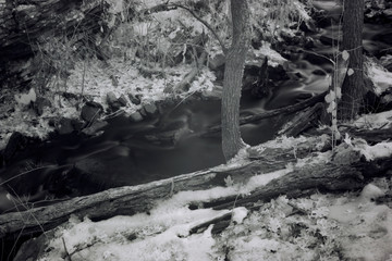 High Contrast Infrared Photography, Dark Forest