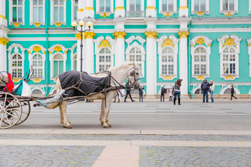 the house stands in a harness against the Hermitage Museum in St. Petersburg.medium shot plan