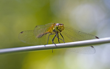 Dragonfly on the branch