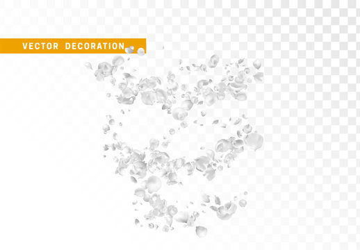 White flower petals are flying circling isolated on transparent background