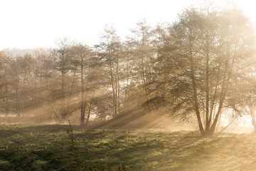 Hazy morning, sun shinning behind the trees in a small forest with fog. Abstract visual texture.