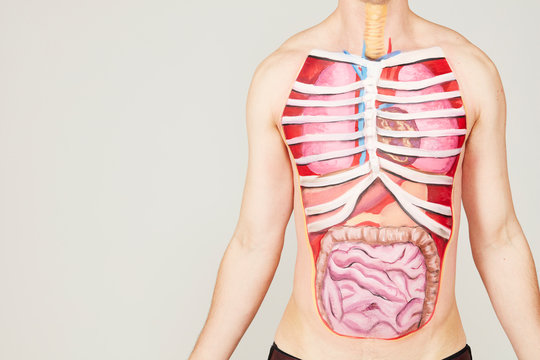 Painting of internal organs on man's body