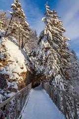 forest bridge in winter at snow, Marienbrücke (Neuschwanstein)