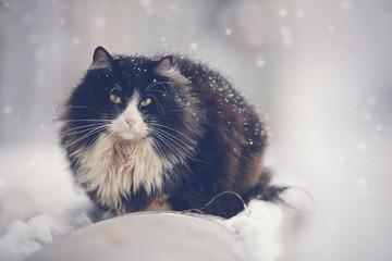 Frozen dirty homeless black cat in winter