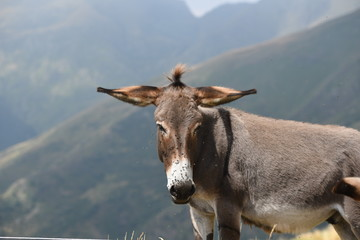 donkey in the mountains