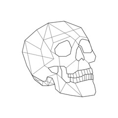 Linear illustration of a skull