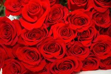 Natural red roses background. bouquet of roses