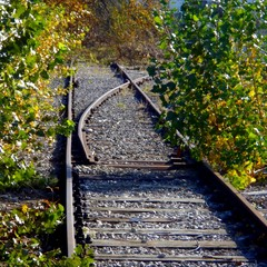 Old Track, Dead End, Leading to Nowhere, Overgrown