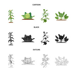 Vector design of greenhouse and plant icon. Set of greenhouse and garden stock vector illustration.