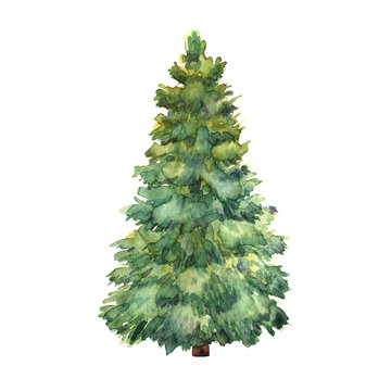 Watercolor green Christmas tree on white background. Isolated ha