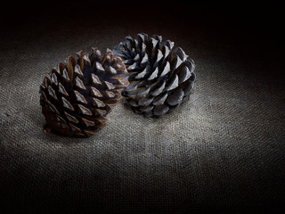 Two pine cones, touching, dark still life. Light painting.
