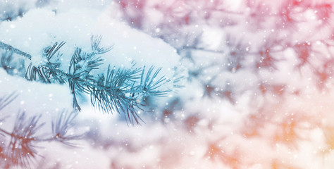 Winter background with pine branch in hoarfrost. Sunset in the winter forest.