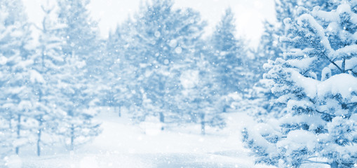 Winter landscape. Winter background with snow-covered coniferous forest.