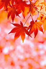秋色 紅葉