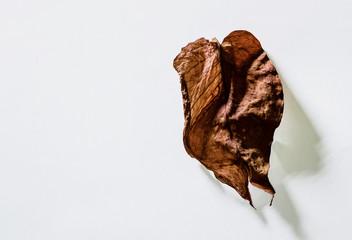dry leaf on isolated.