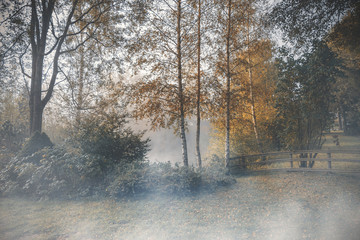 Mystic foggy autumn scene in the garden