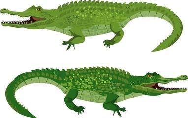 Couple of green vector crocodiles, isolated vector illustration