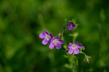 FLOWERS - violet on green