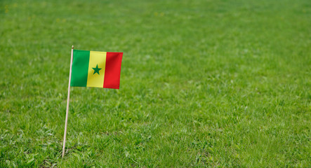 Senegal flag. Photo of Senegal flag on a green grass lawn background. Close up of national flag waving outdoors.