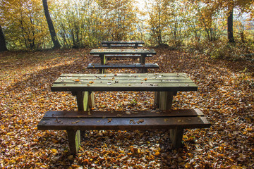 Autumn forest with benches in the Black Forest, Germany