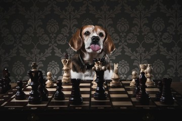 Dog playing chess