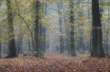 Jesiennie i mgliście