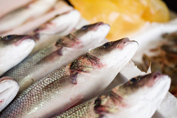 Sea fish on counters in the market.