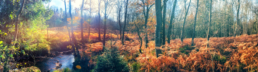 Panoramic autumn landscape with forest stream