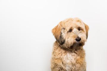 Süßer Hund schaut knuffig