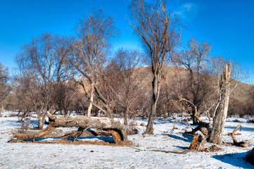 Winterlandschaft in der Mongolei