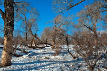 Winterlandschaft in der Mongolei