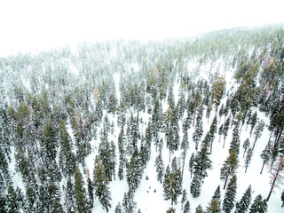 Aerial of snow covered trees in a forest