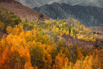 Colorful trees with mountains in the distance during autumn