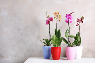 Beautiful tropical orchid flowers in pots on table near color wall. Space for text
