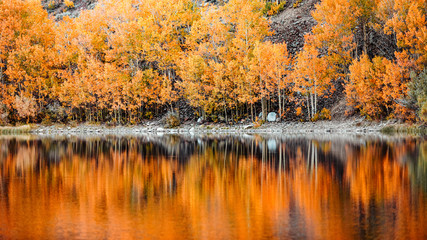 Colorful trees reflected on the water in autumn