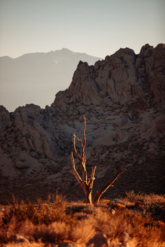 Bare tree with mountains in the distance
