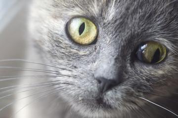 Cross-eyed cat portrait