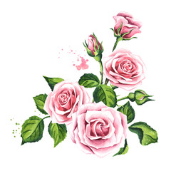 Pink rose composition. Watercolor hand drawn illustration,  isolated on white background