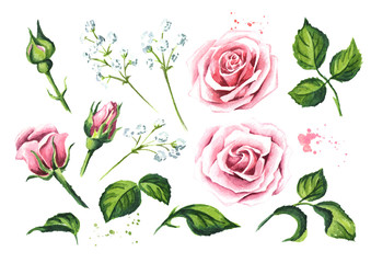 Set of elements of pink rose flower. Watercolor hand drawn illustration,  isolated on white background