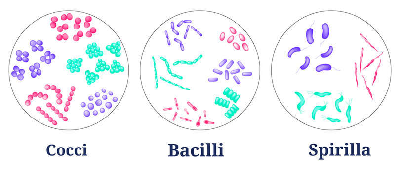 Arrangements of bacterial microorganism in Petri dish.