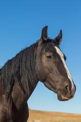 Portrait of a Beautiful Wild Horse