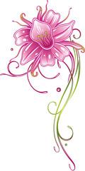 Bunte exotische Orchidee, mit filigraner Ranke in pink und grün.