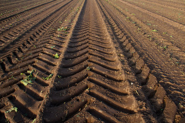 Tire tracks of a heavy sugar beet harvester in an empty field after harvest