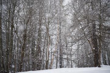 alberi nevicata inverno