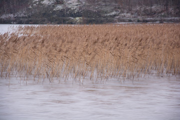 dried orange grass in a lake with icy rocks at distance