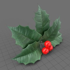 Holly berry leaves and fruits 1
